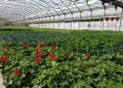 Incontri con le aziende del comparto floricolo. Calendario
