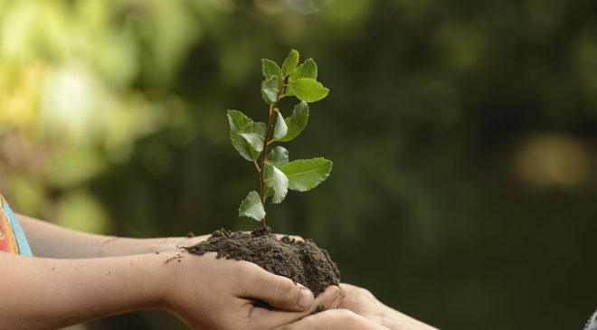 Il verde, elemento fondamentale del percorso educativo scolastico