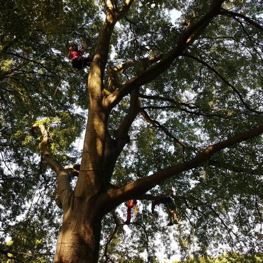 Subito il rinnovo del Bonus verde, strumento fondamentale per contrastare la capitozzatura degli alberi