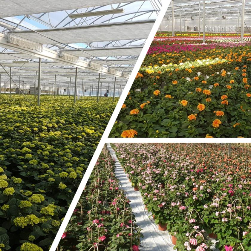 DPCM: importante specifica riguardante i prodotti florovivaistici. E' consentita la vendita di semi, piante e fiori ornamentali, piante in vaso, fertilizzanti e di altri prodotti simili