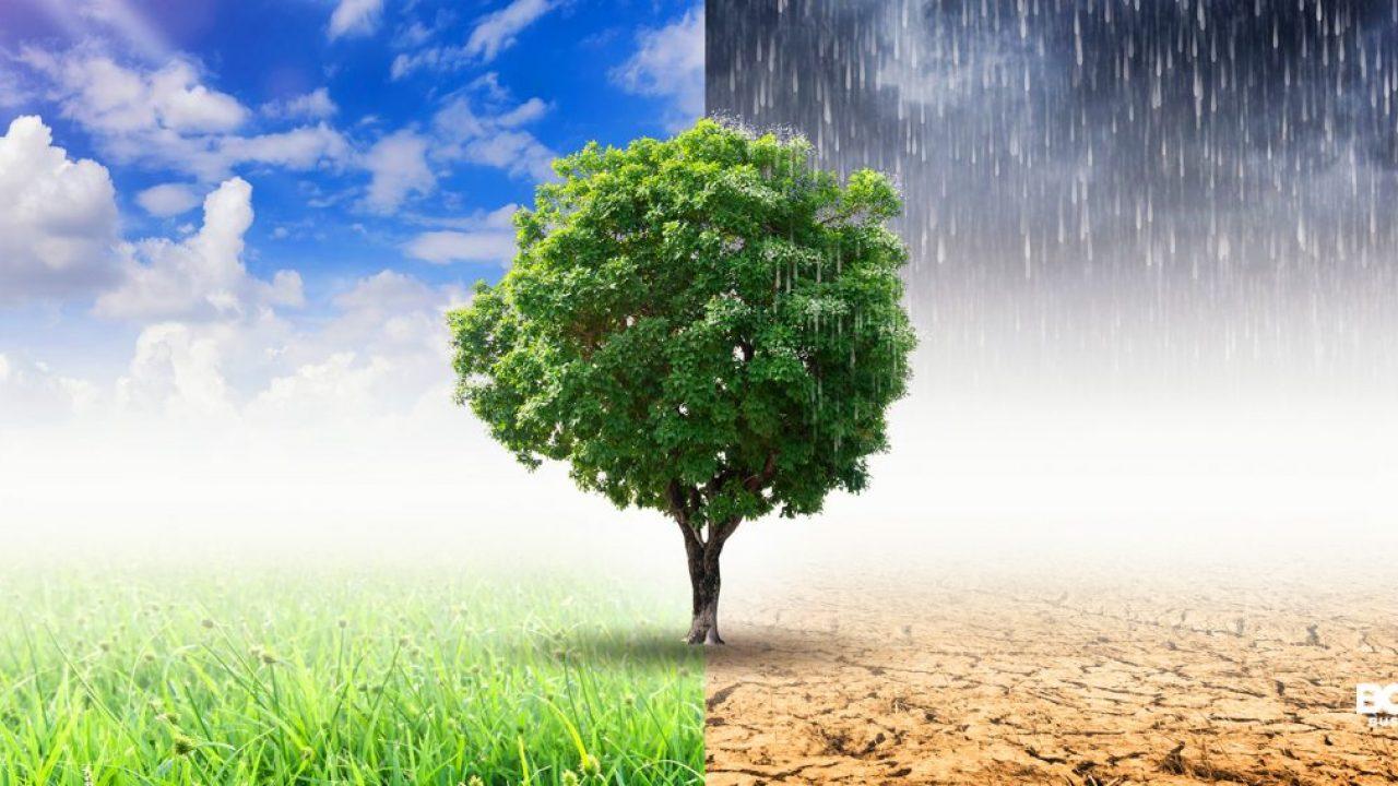 Ricercatori del CNR scrivono al direttore del TG1: disinformazione causa danni all'ambiente e anche al settore florovivaistico