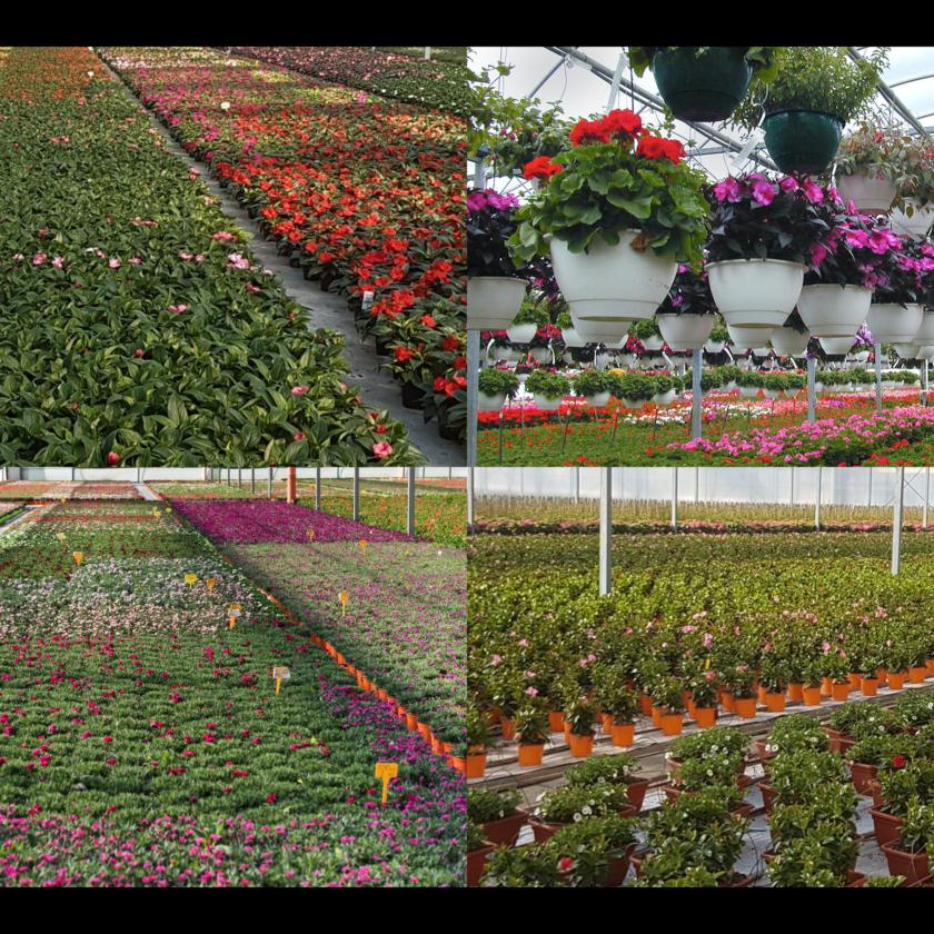 Gruppo di lavoro nazionale per il settore floricolo