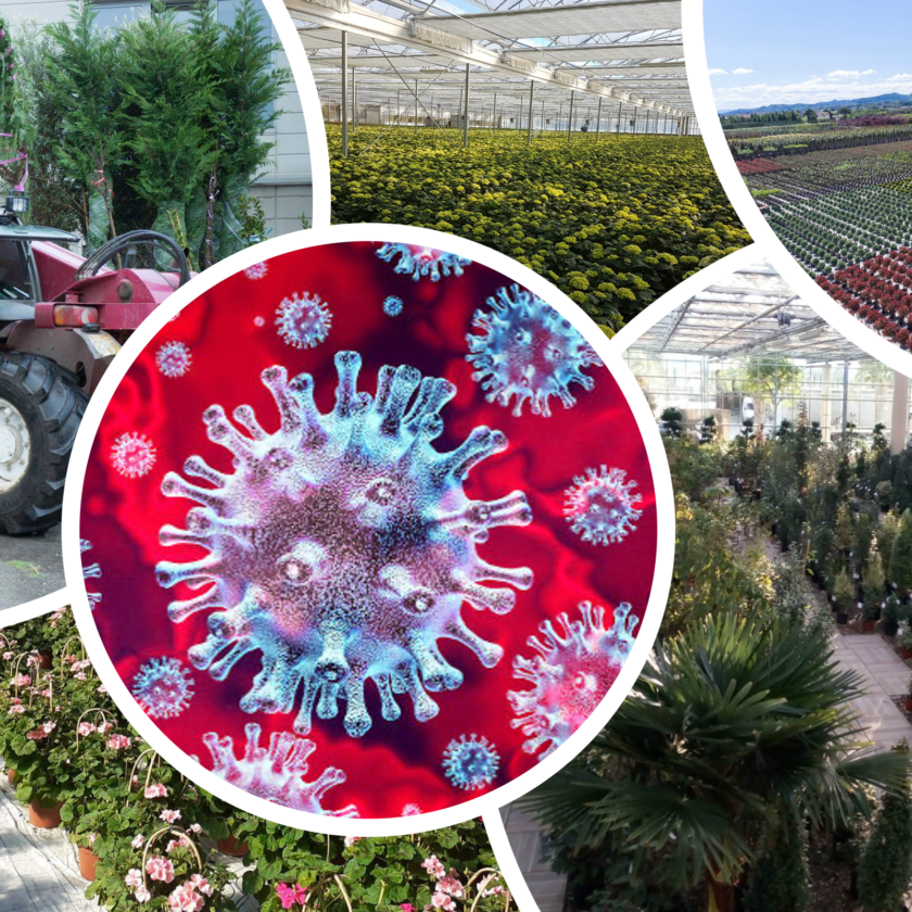 La floricoltura e il vivaismo italiano chiedono l'esonero dei contributi