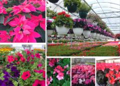 Incontro tecnico con le aziende floricole della Puglia