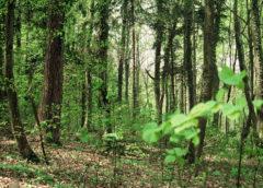 Boschi e foreste nel Recovery Fund. Al centro la gestione forestale sostenibile