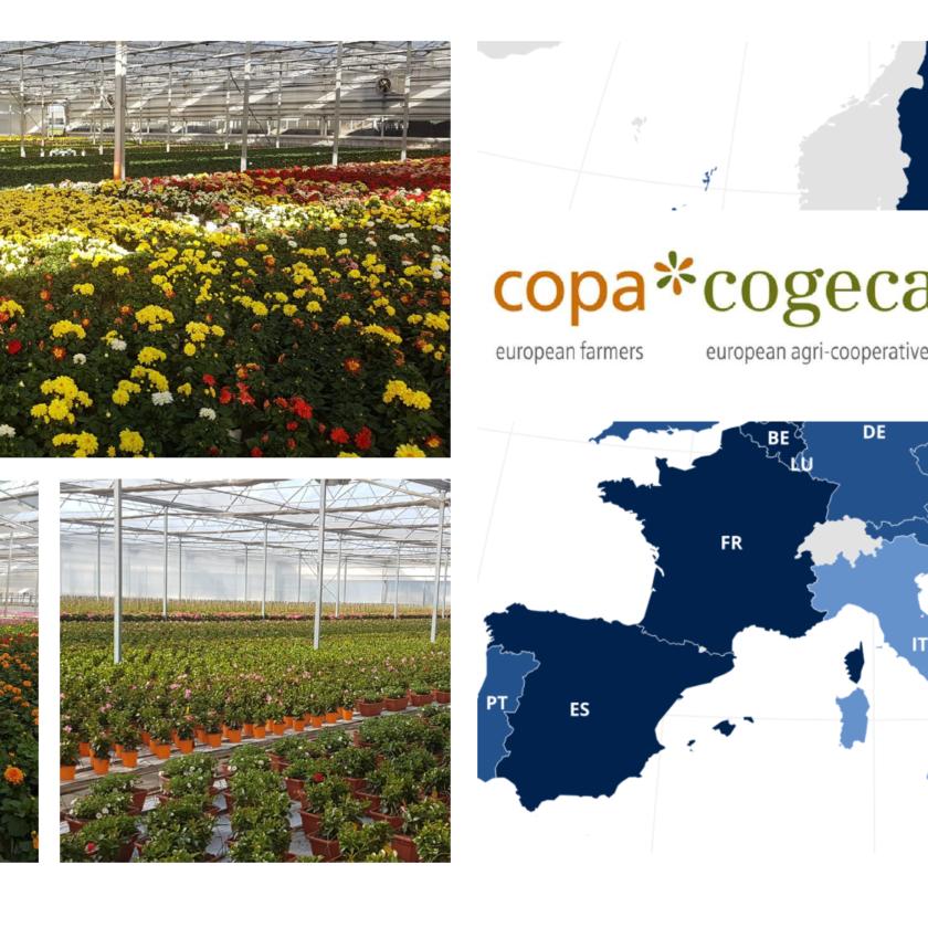 La floricoltura italiana in Europa con Gianluca Boeri, nominato Vice Presidente del gruppo floricolo europeo.