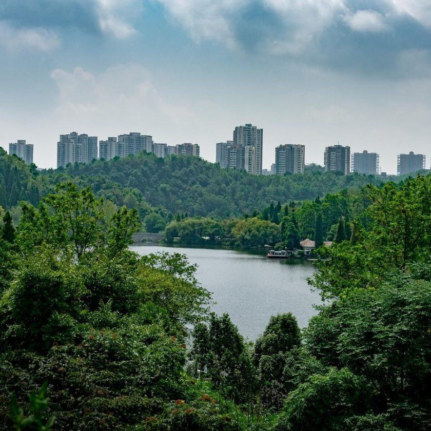 Giornata internazionale delle foreste: piantiamo alberi provenienti da vivai italiani