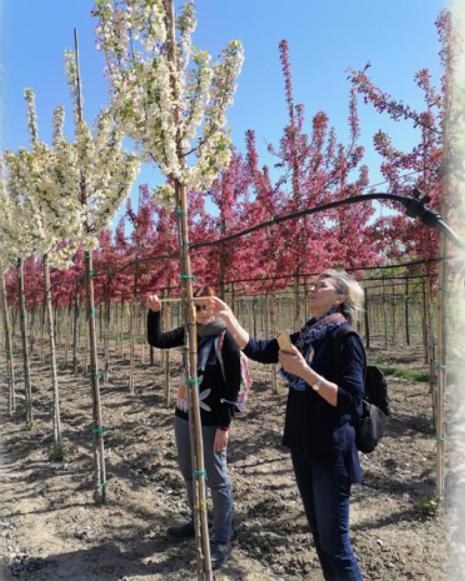Progetto Vivam: il 16 Luglio ricercatori CNR in campo per attività dimostrative e divulgative sui benefici degli alberi